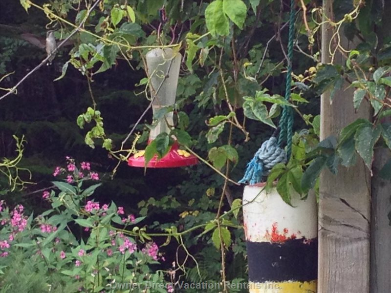 This is a Hummingbird Haven. With Feeders Galore, it is Easy to Sit and Watch Them.