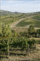 Vineyards that Surround the Property
