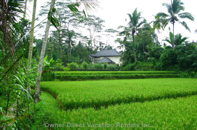 The Villa is Surrounded by a Serene Setting of Rice Fields