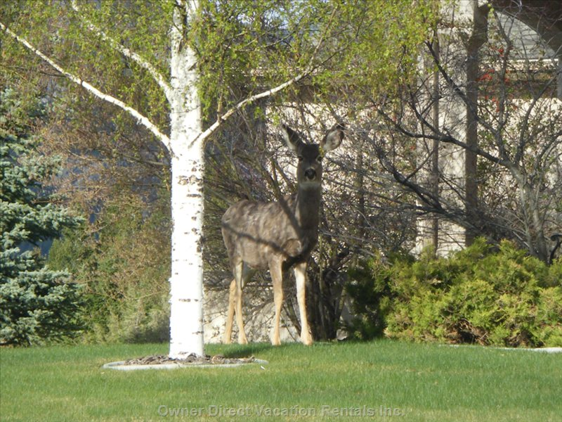 Watch Wildlife from the Patio Wandering on the Grounds!