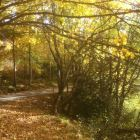 Autumn Hues in the Huge National Park Just above the Villa.