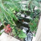 Koi Ponds and Beautiful Gardens.