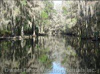 Shingle Creek - Local Water Way Full of Wildlife