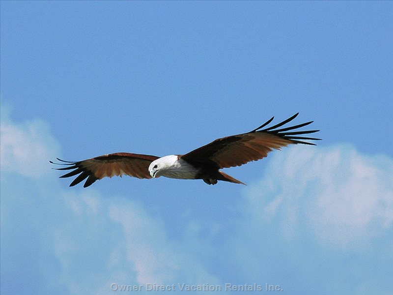 Sea Eagles Perform Daily