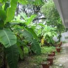 Banana Grove - within the Compound Wall of the Apartment Building