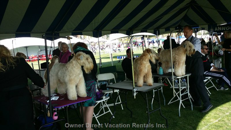 2016 January Visit and Enjoy Or Participate in our World Wide Dog Show 10 Min Drive from Condo