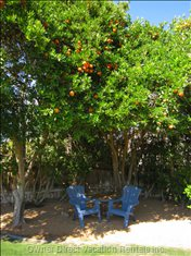 Always a Peaceful, Shady Spot to Sit under the Orange Trees