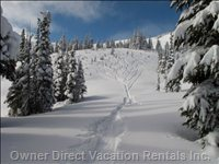 Staccato Glades of Symphony Chair, Whistler Mountain