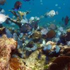 Breathtaking Sea-skapes in Swimming Distance. - our Area is Arguably the Finest Snorkeling Site in the Mahahual Region.
