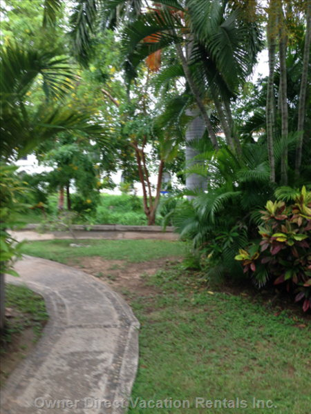 Tropical Paths