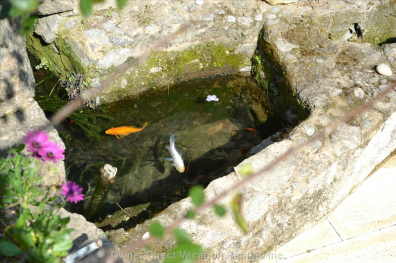 Some of the Fish in the Natural Spring and Cave