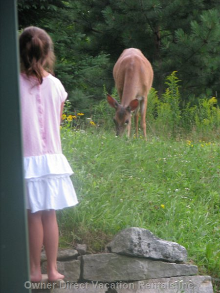 The Deer Come Pretty Close to People Here