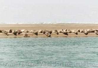 Seals Nest on Sandbars Directly in Front of the Cottage...