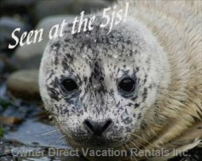 Baby Otter Seen at the 5js Beach - Taken by one of our Guests! the 5js is Located at one of the Only Designated Whale Watching Sites on the Oregon Coast!