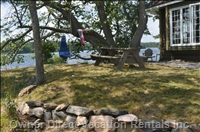 Picnic Table, Tree Swing and Hammock