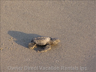Baby Turtle - Just Released