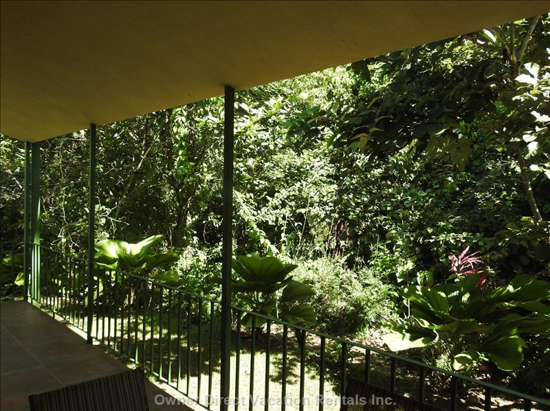 Jungle Deck with Table and Chairs for Dining Outdoors If Desired