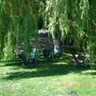 Shaded Area on the Lawn under one of the many Weeping Willow Trees.