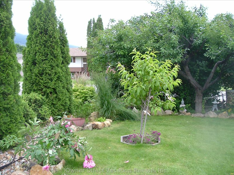 Front Yard with Plum Trees