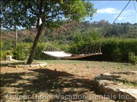 Hammock under Orange Trees, for Guestsonly