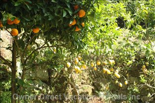 Enjoy the Fruits of our Orchards - we Have Oranges, Lemons, Apples, Plums, Cherries, Figs, Chestnuts...
