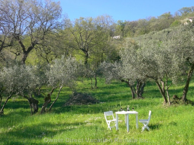 Villa Grounds - Picnic in our Olive Grove, Or Enjoy an Olive Picking Holiday in October