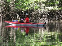 Kayak in the Mangroves