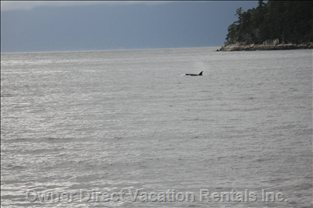 Watching Orcas from the Deck