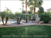 Backyard Palms and Grass Area