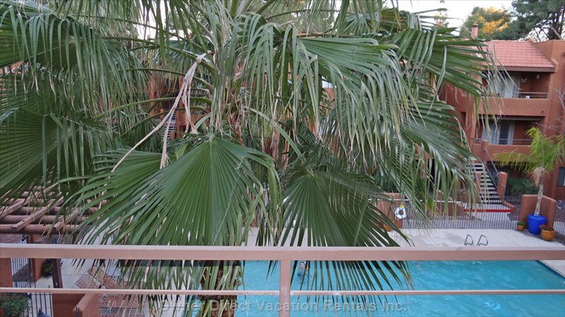 Windmill Palm Provides Shade to Part of your Private Deck. View of the Pool.