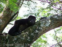Encounter Monkeys in the Rain Forest