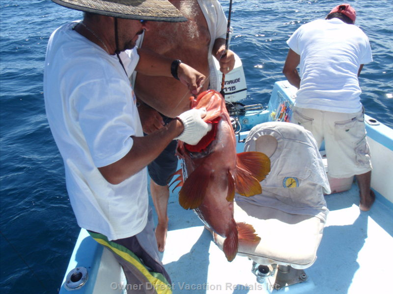 Great Sportfishing