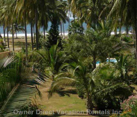 Typical Views from our Villa - through the Swaying Coconut Palms & Flowers.