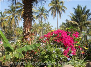 Our Beautiful Mix of Coconut Palms and Tropical Flowers.