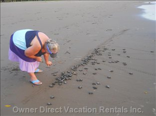 Our on-Site Sea Turtle Hatchery Releases over 100,000 Baby Turtles each Year.
