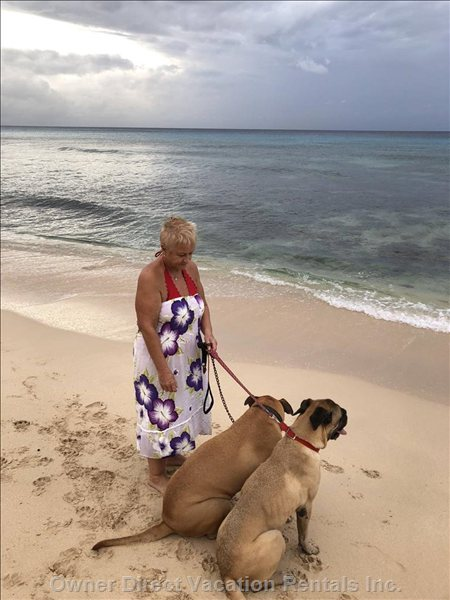 Coco & Chia with Tina, the Dogs are Available for Early Morning Walks to Complete your Dream Holiday.