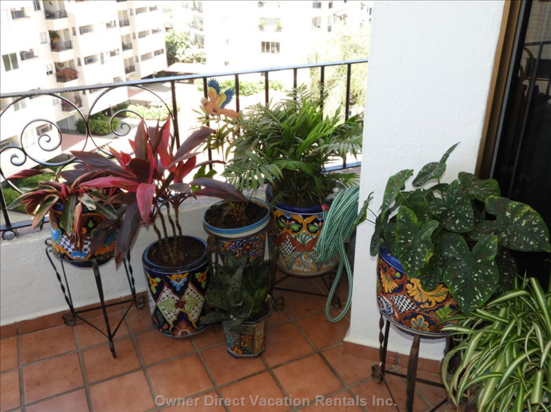 Beautiful Live Plants in and around the Home
