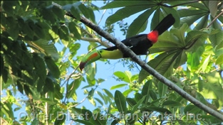 Toucan on the Property