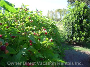 Red Fruits...Blackberries