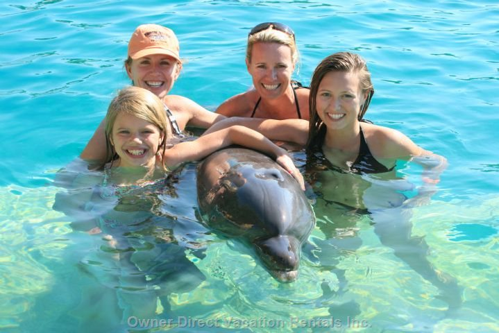 Swimming with the Dolphins is one of many Activities to Do
