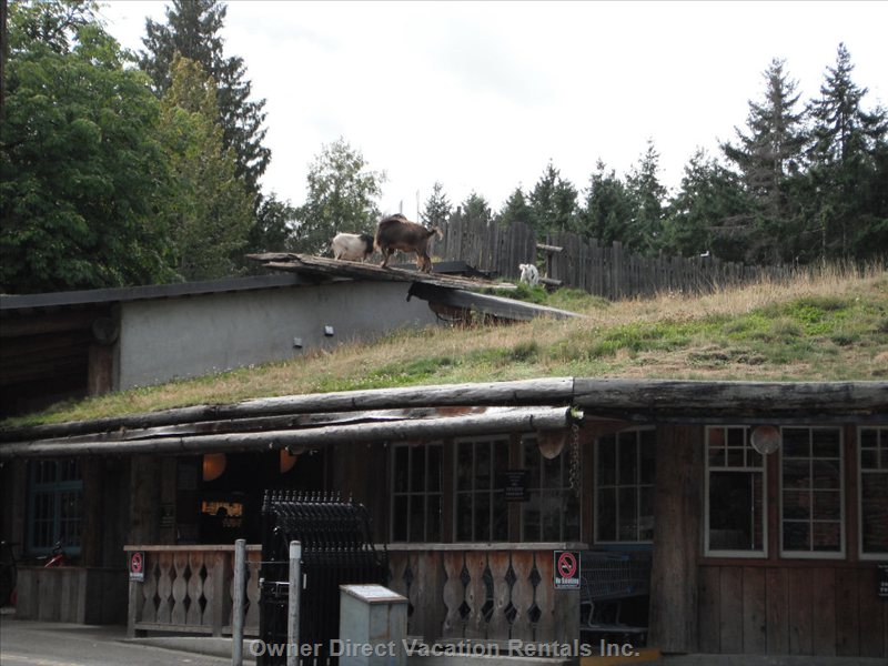 Popular Goats on the Roof Marketplace