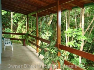 Watch the Squirrel Monkeys and Colorful Birds and Listen to the Howler Monkeys.