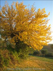 Autumn in Regnano - a Picturesque Walk from the House