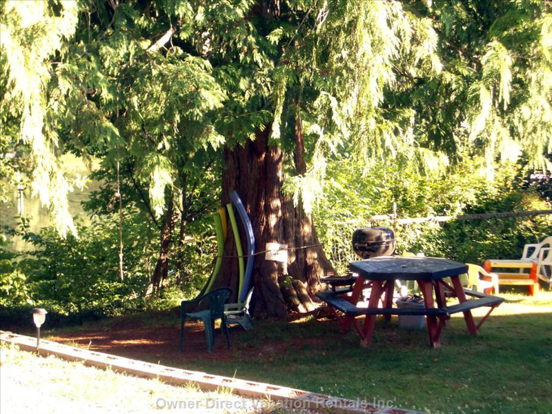 Large Cedar Viewed from your Suite
