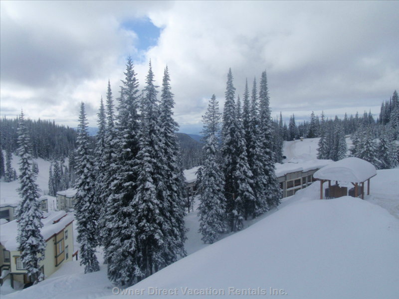 Lots of Snowy Trees to Add Ambience to your Ski Vacation.