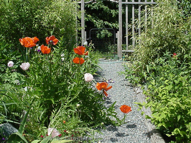 Poppies in Spring along Path to Suite