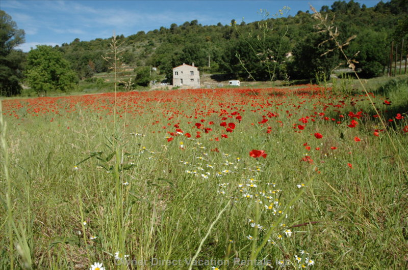 Poppy Field in St. Martin DE Bromes
