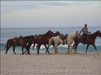 Horse Back Ride on the Beach in Front