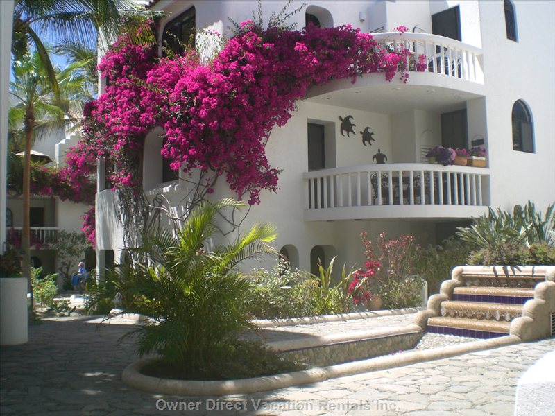 Villas Baja Courtyard - Sparkling Fountains with Red Bougainvillas Surround the Common Grounds