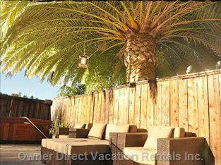 Jacuzzi Hot Tub and Resort Quality Loungers under Huge Palm